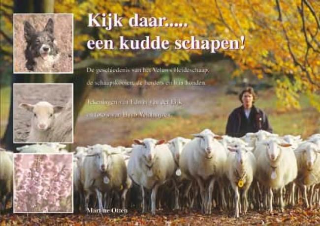 Kijk daar….. een kudde schapen!